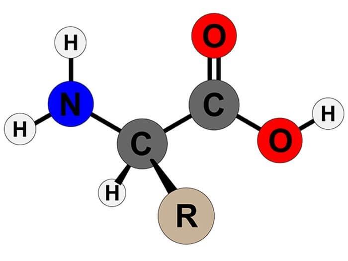 cấu tạo phân tử amino axit