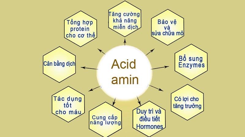 tác dụng của amoni axit