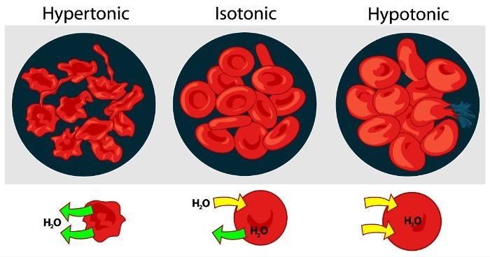 Áp suất thẩm thấu của máu