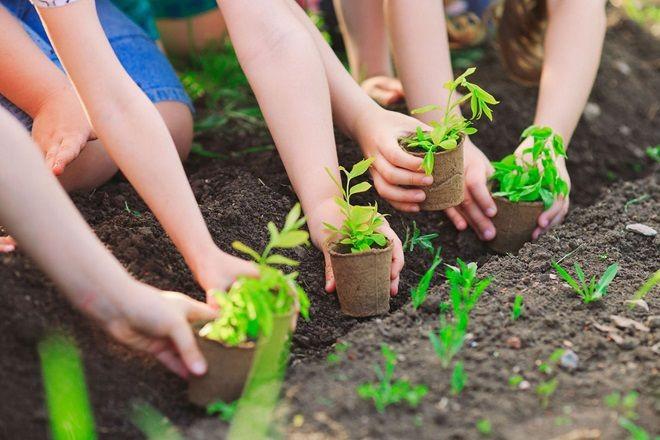Trồng cây xanh bảo vệ môi trường không khí