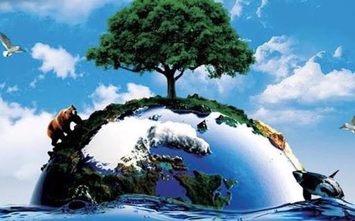 Vai trò của môi trường