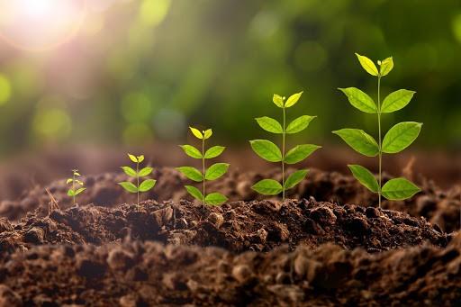 Canxi oxit giúp làm tăng độ pH của đất