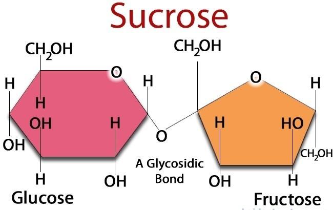 Cấu tạo phân tử đường sucrose