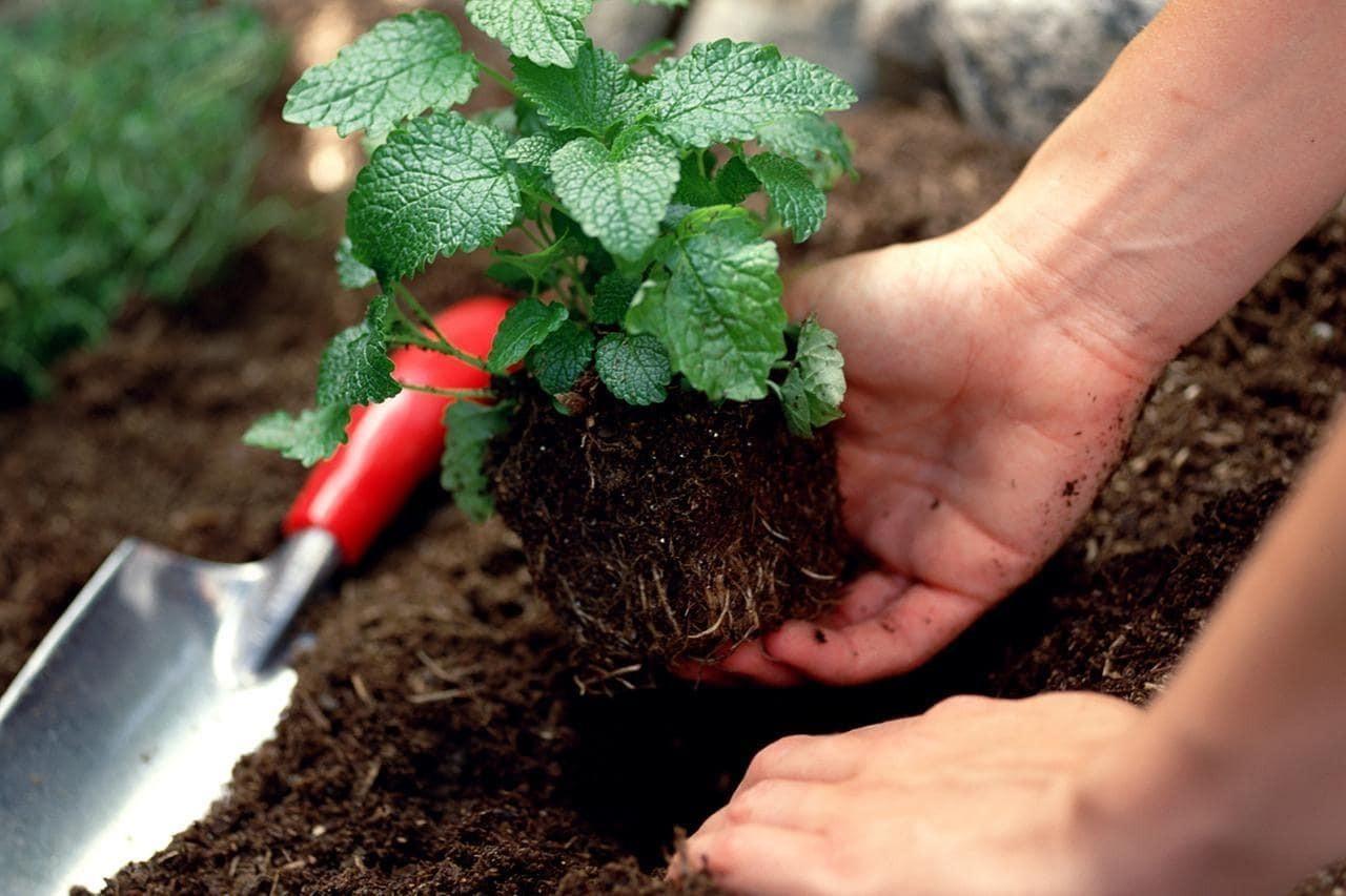 Chứa đủ dưỡng chất giúp cây phát triển tốt