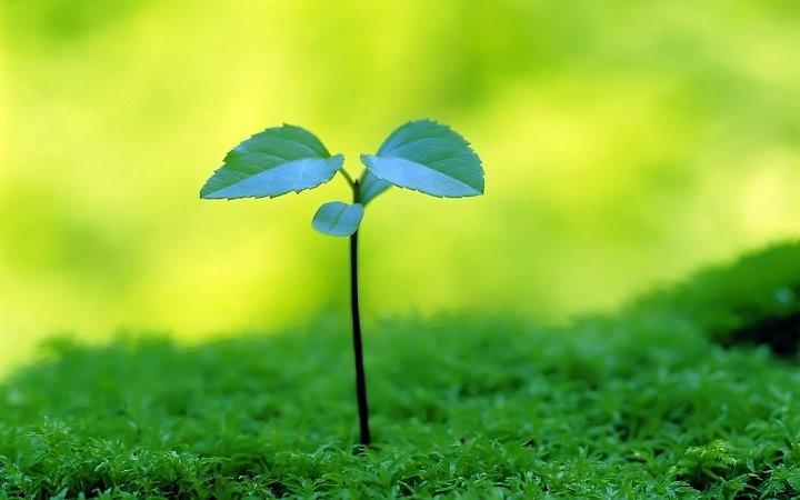 KNO3 chứa đủ dưỡng chất giúp cây phát triển tốt