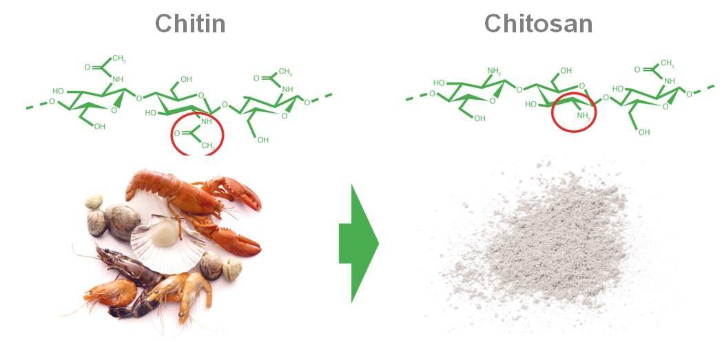 Cách sản xuất chitosan