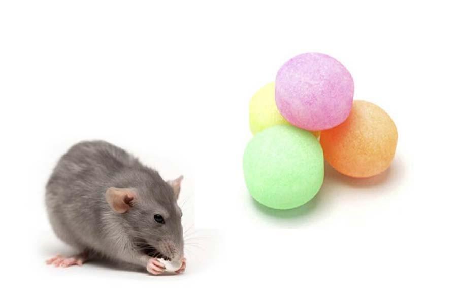 Naphthalene tác động mạnh đến sự phát triển các khối u dạ dày, phổi, mũi của chuột