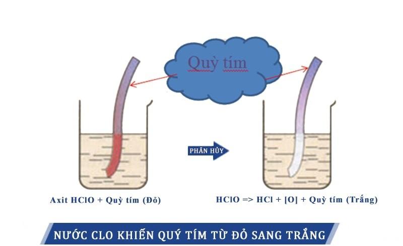 Sự thay đổi màu của quỳ tím do dung dịch nước Clo