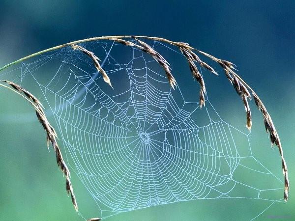 Polymer có trong tơ nhện