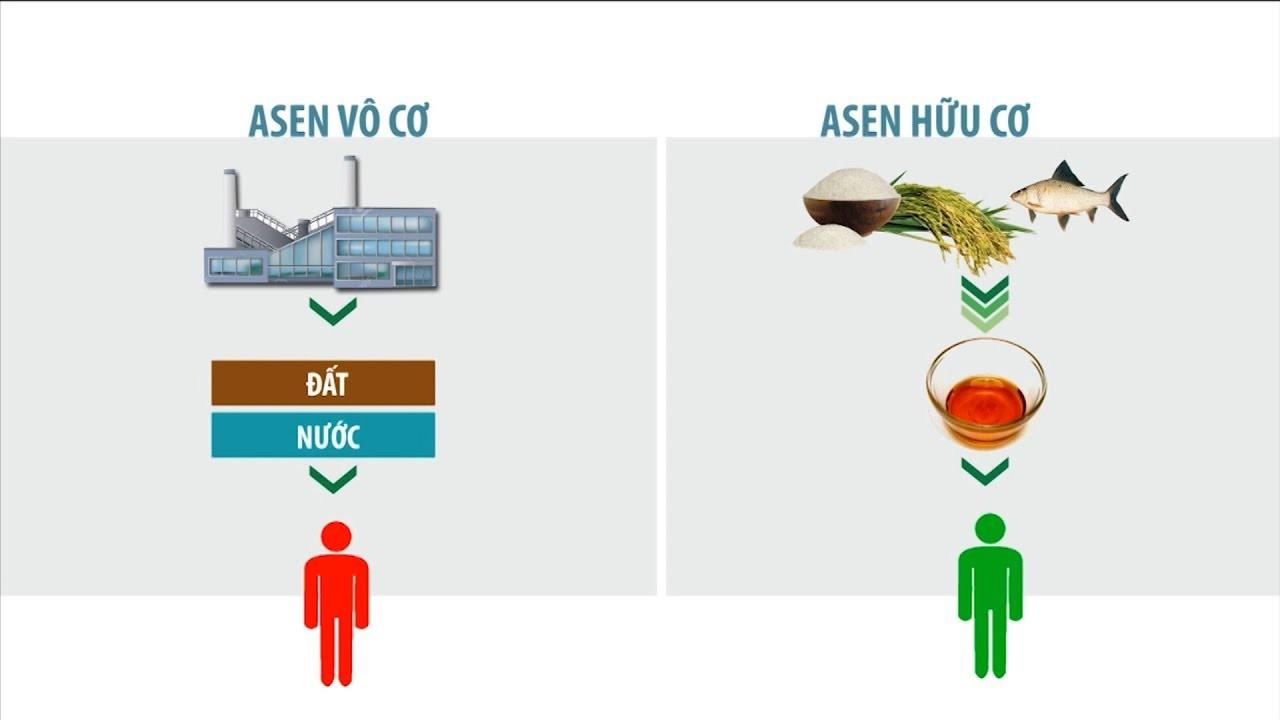 Asenđược phân loại thành 2 dạng chính là dạng hữu cơ và dạng vô cơ