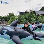 Phao bơi cá voi đen intex 58561