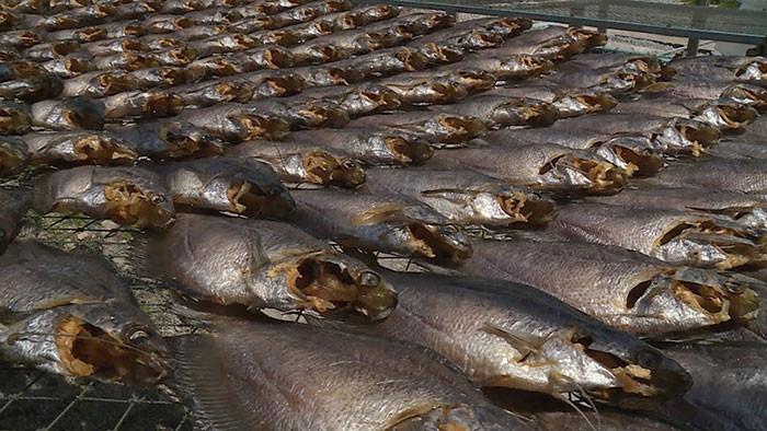 Quy trình chế biến khô cá sặc rằn