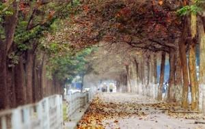 Địa điểm chụp ảnh đẹp Đường Kim Mã, Cầu Giấy