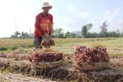 Địa Điểm Bán Hành Tím Ủng Hộ Nông Dân Sóc Trăng Tại Hà Nội