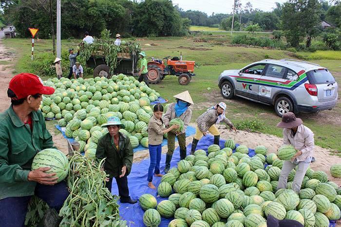 Địa chỉ mua dưa hấu ủng hộ nông dân Quảng Nam tại Hà Nội