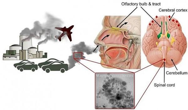 Ô nhiễm không khí ảnh hưởng đến hô hấp và tim mạch
