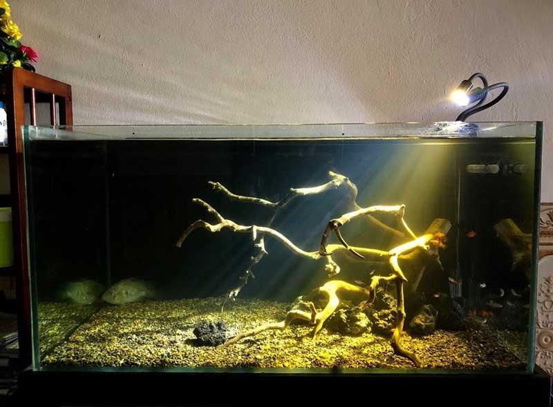 Đèn rọi bể cá 3W - Đèn rọi trang trí bể cá 3W ánh sáng trắng lạnh 12000K