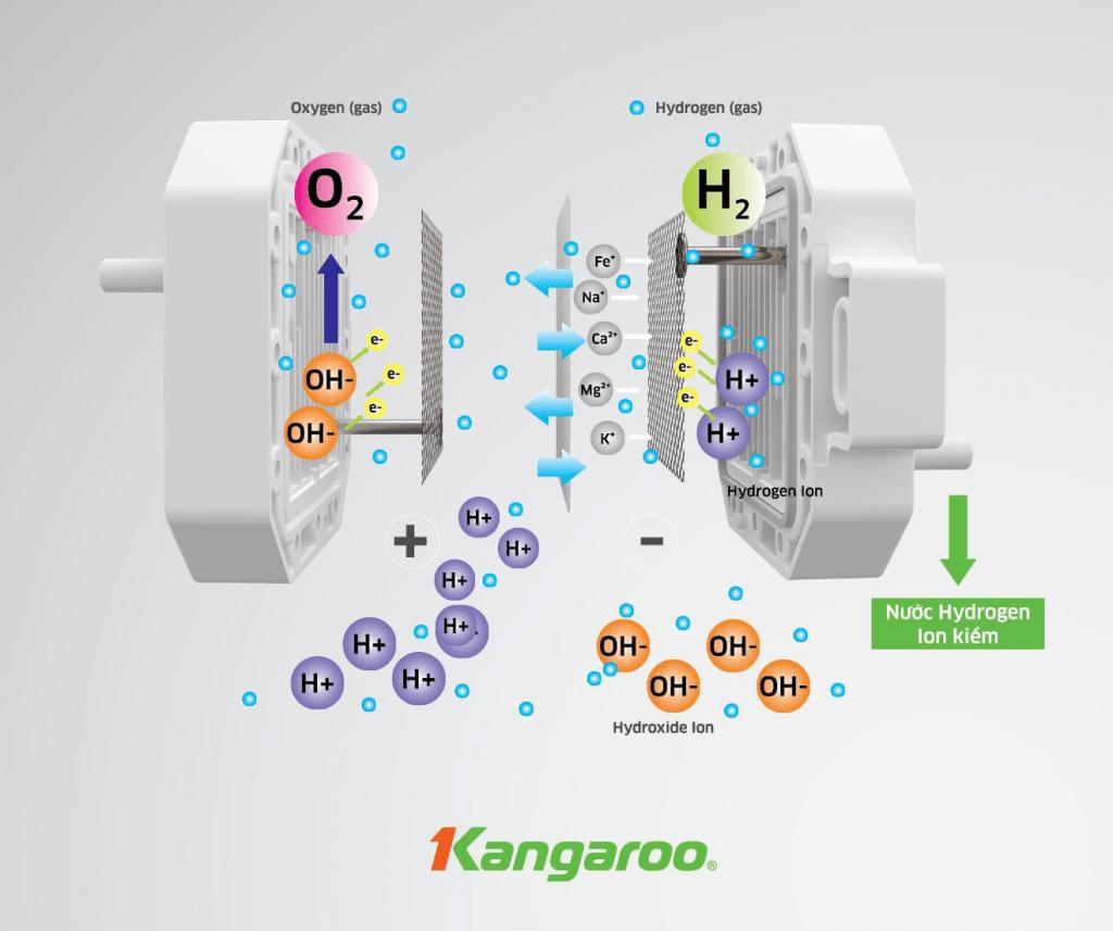 KangArticle 2