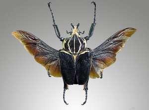Bọ cánh cứng ăn gì? Các loại bọ cánh cứng quý hiếm ở Việt Nam