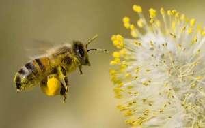 Các loài ong ở Việt Nam: ong vò vẽ, ong mật và ong vàng