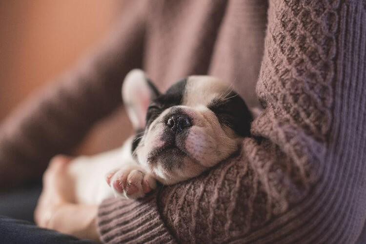Chó con bao nhiều ngày thì tách mẹ