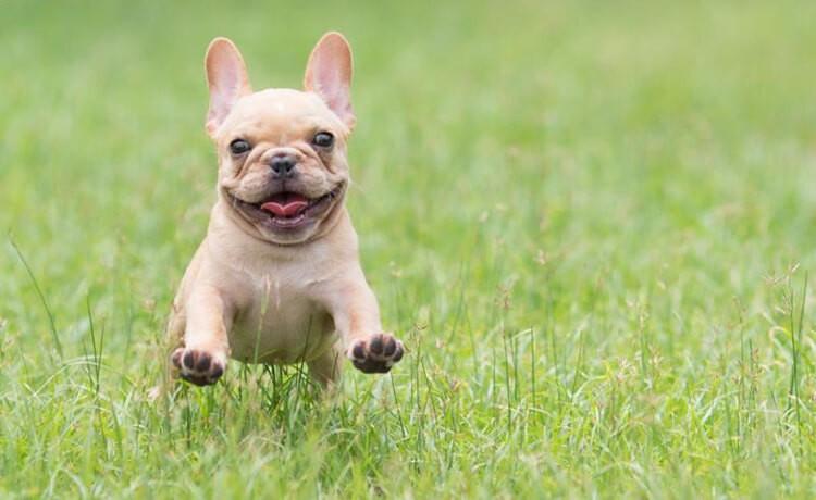 Giúp chó vận động, vui chơi