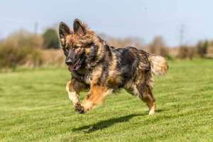 Cách huấn luyện chó từ A - Z ngay tại nhà