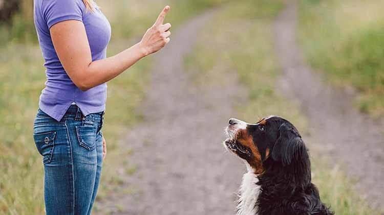 Cách dạy chó đứng