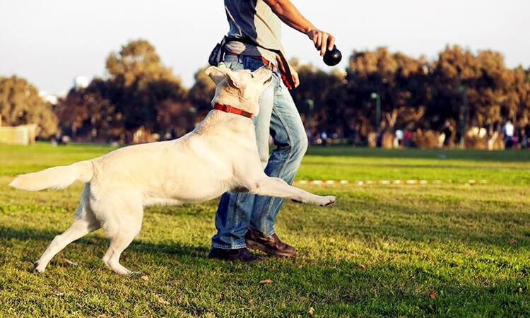 Chọn giống chó khôn theo người huấn luyện