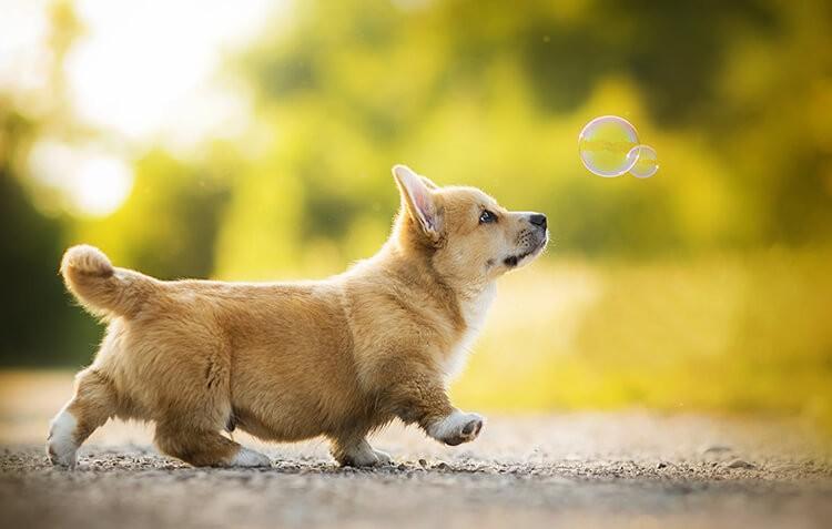Chăm sóc chó đúng cách