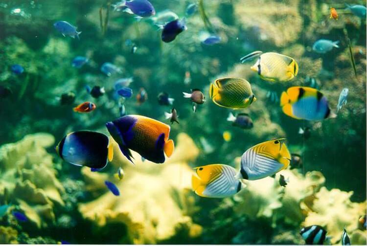 Nuôi cá không cần oxy