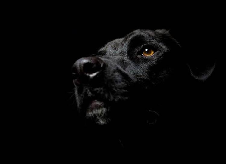 Màu đen đem đến những điều không tốt theo quan niệm xưa