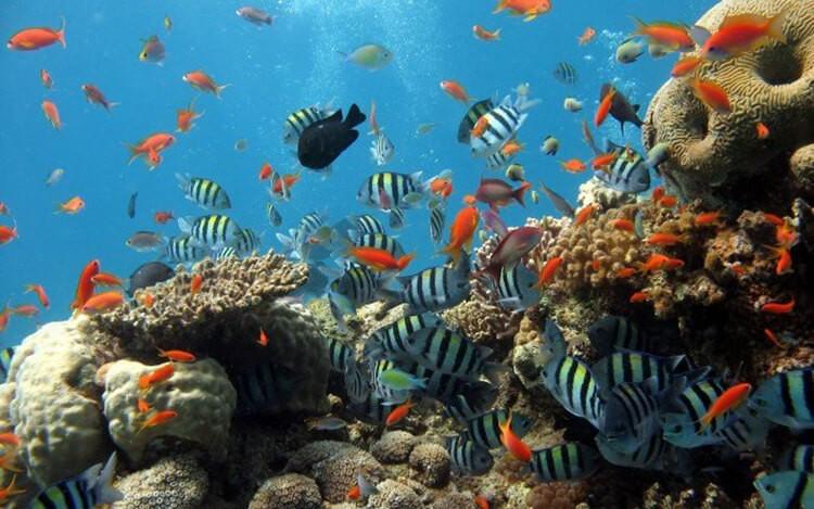 Các giống cá cảnh nhỏ tại Việt Nam