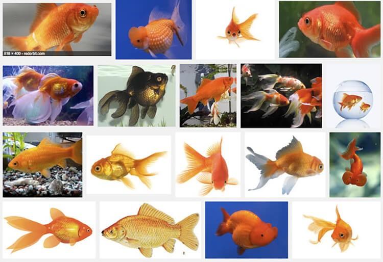 Các loại cá 3 đuôi