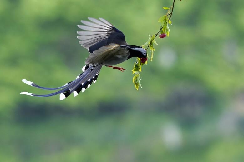 Thức ăn của chim giẻ cùi