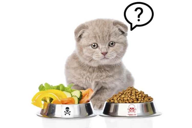 Thức ăn cho mèo rất đa dạng