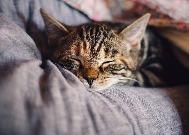 Chăm sóc mèo đúng cách