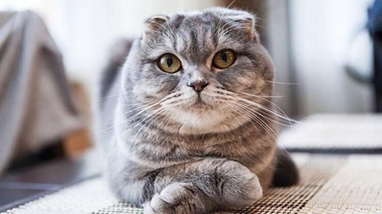 Phòng ngừa mèo bị nấm