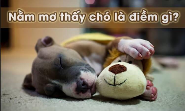 Ngủ mơ thấy chó tốt hay xấu?