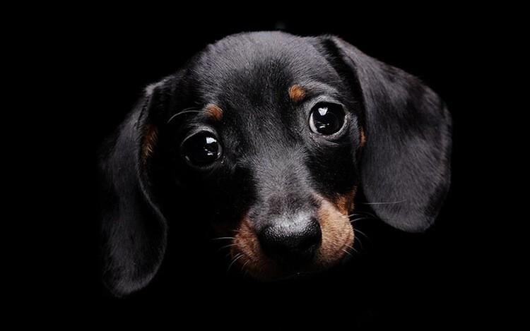 Chiêm bao thấy chó đen