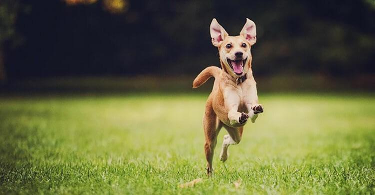 Chiêm bao thấy chó đuổi