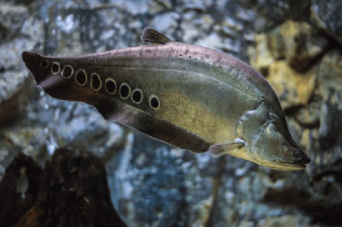Hình ảnh cá nàng hai