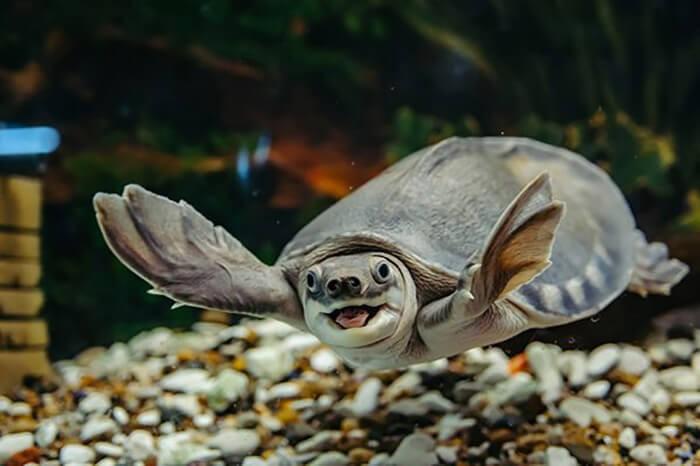 Rùa nước ngọt sống trong môi trường nước