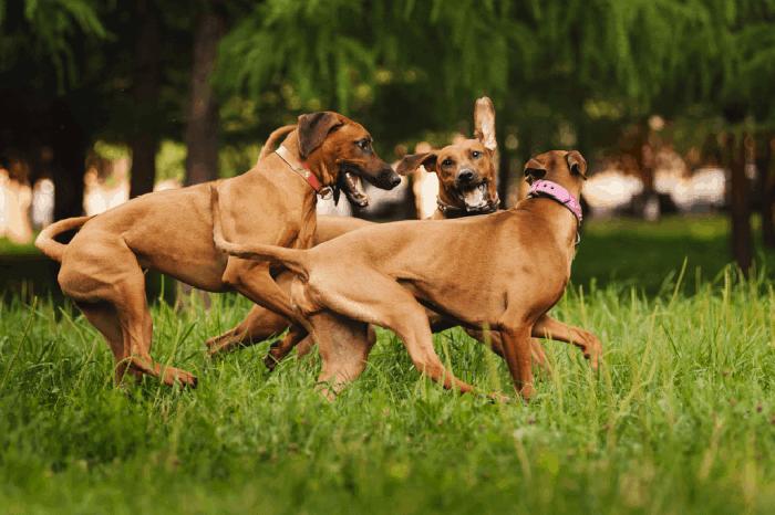Lợi ích của việc thiến chó