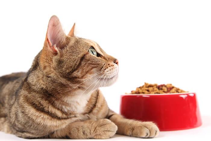 Mèo lười ăn phải làm sao?