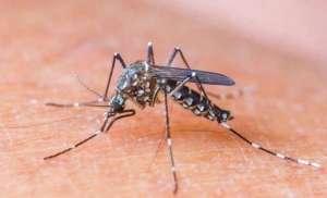 Vòng đời của muỗi bao nhiêu ngày? Sơ đồ vòng đời của muỗi