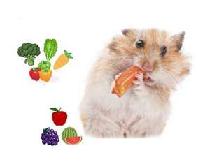 Chuột Hamster ăn gì cho mập? Hạt hướng dương hay xúc xích?