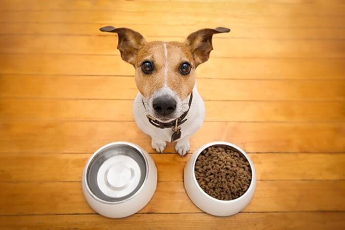 Chăm sóc chó tại nhà