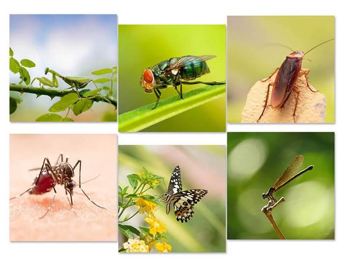 Côn trùng có cánh, côn trùng ký rất đa dạng