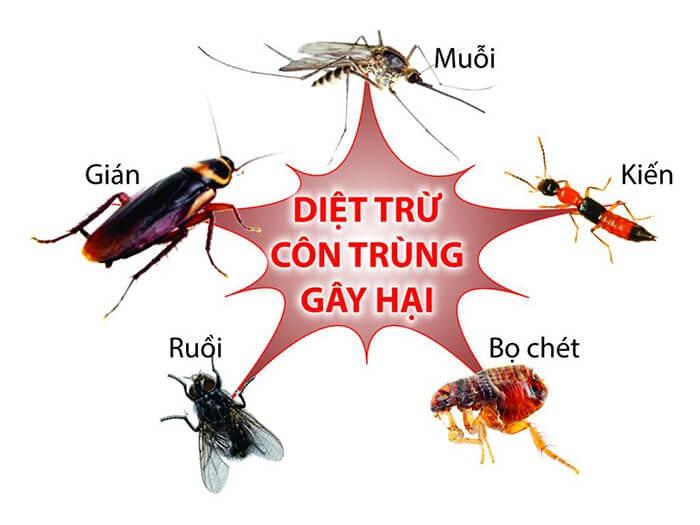 Diệt côn trùng trong nhà